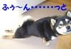 ashinobashi